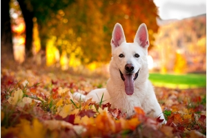 Fido's Fall Safety Checklist