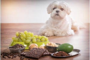 The ABC's of Foods to Avoid Feeding Your Dog