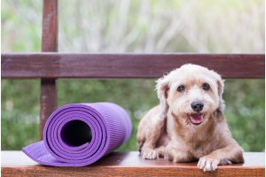 Exercising With Your Pup!