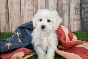 Fourth of July Tips for Fido