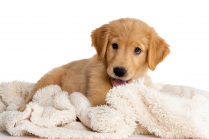 Tips for First Time Puppy Owners