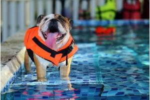 Summer Swimming Tips