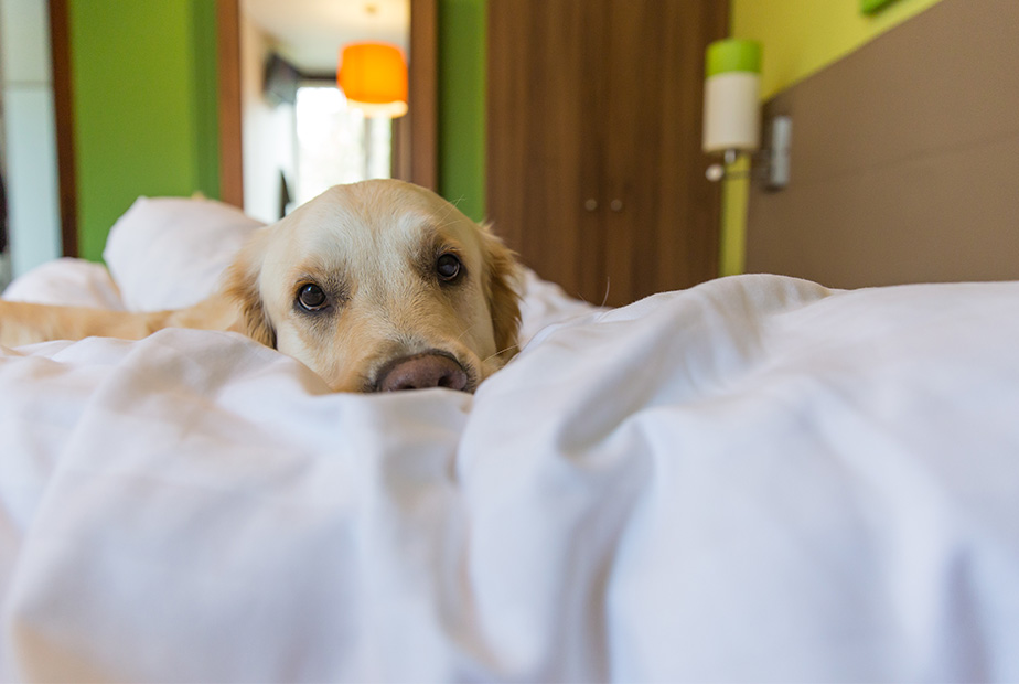 Choosing the Right Pet Bed