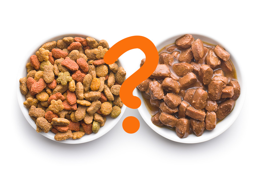 Dry Food vs Wet Food: Which is Right for Your Dog?