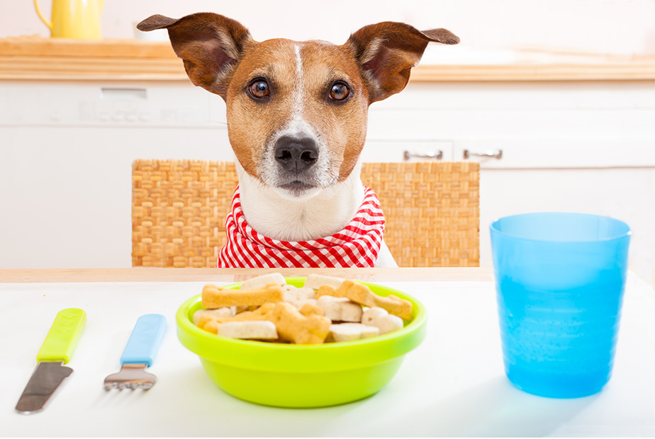 Pet Food Choices and Your Pet's Age
