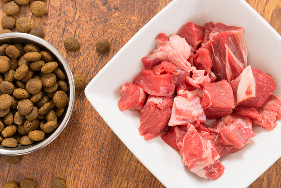 Picking a Protein Source for Your Pup