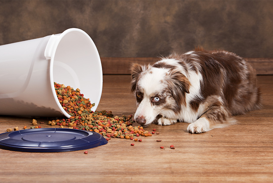 How to Store Pet Food – The Do's and Don'ts