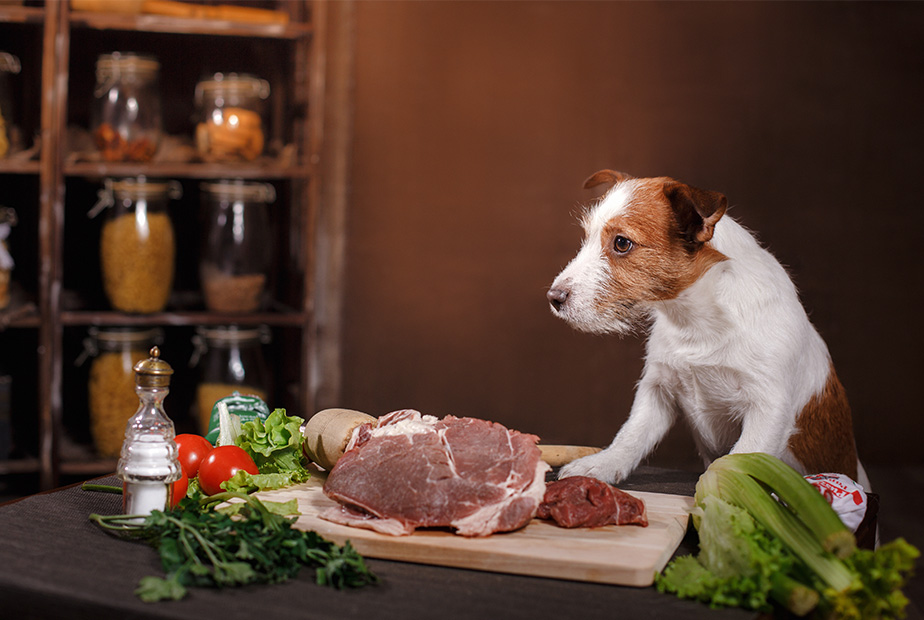 Should I Feed My Pets Grain Free Foods?