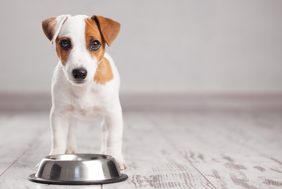Part III – Should Your Pet Eat Soy?